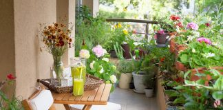 How To Choose The Best Plants For Your Rooftop Garden